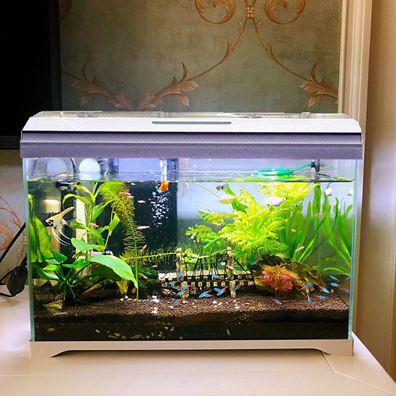 森森超白桌面小鱼缸 带盖生态玻璃缸水族箱水草缸客厅造景金鱼缸