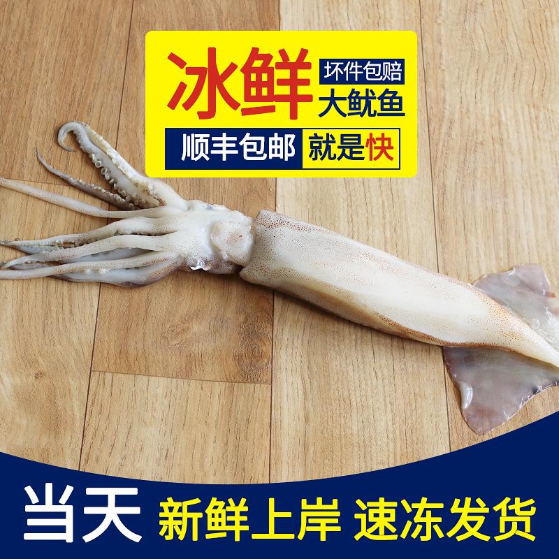 [3斤包邮]青岛野生新鲜大鱿鱼 非冷冻鱿鱼 新鲜速冻发货 500g