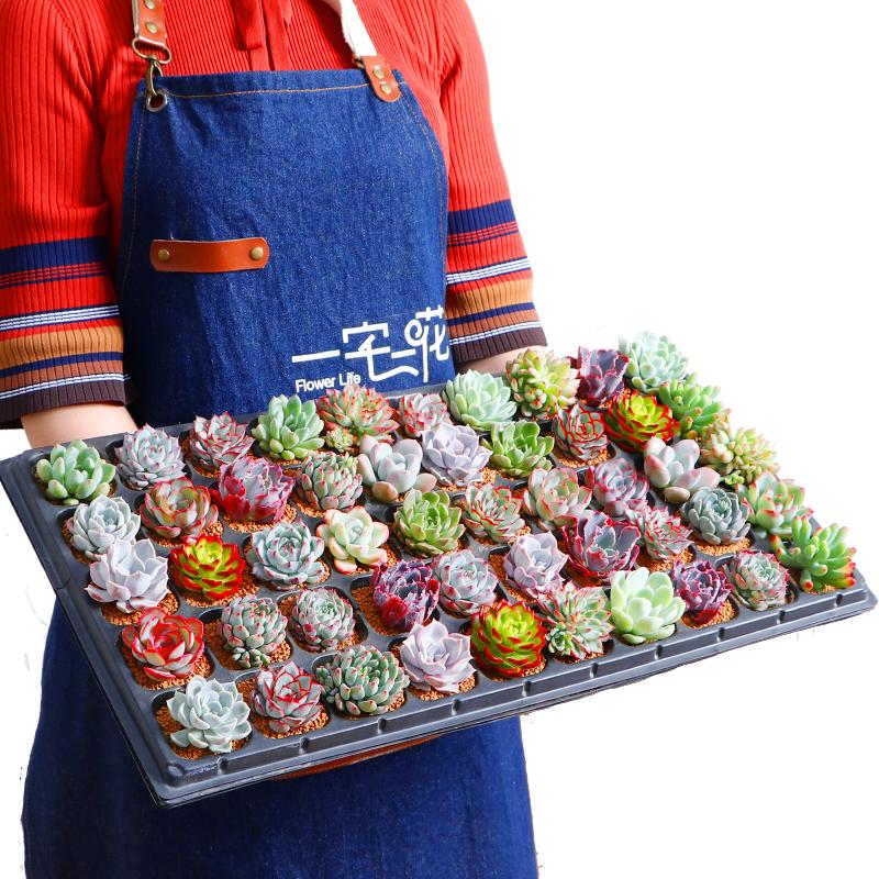 T水培多肉布丁瓶微景观多肉植物组合盆栽DIY乐趣绿植花卉玻璃礼品