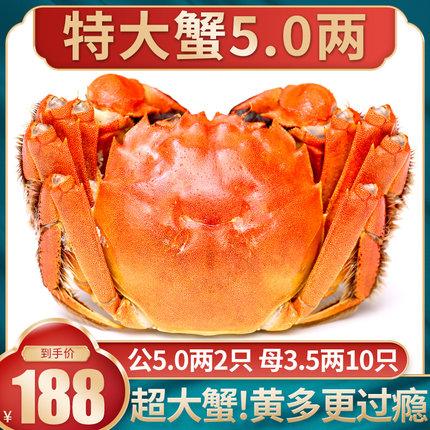 12只特大现货大闸蟹螃蟹鲜活礼盒阳澄湖镇官方旗舰全公母河蟹海鲜