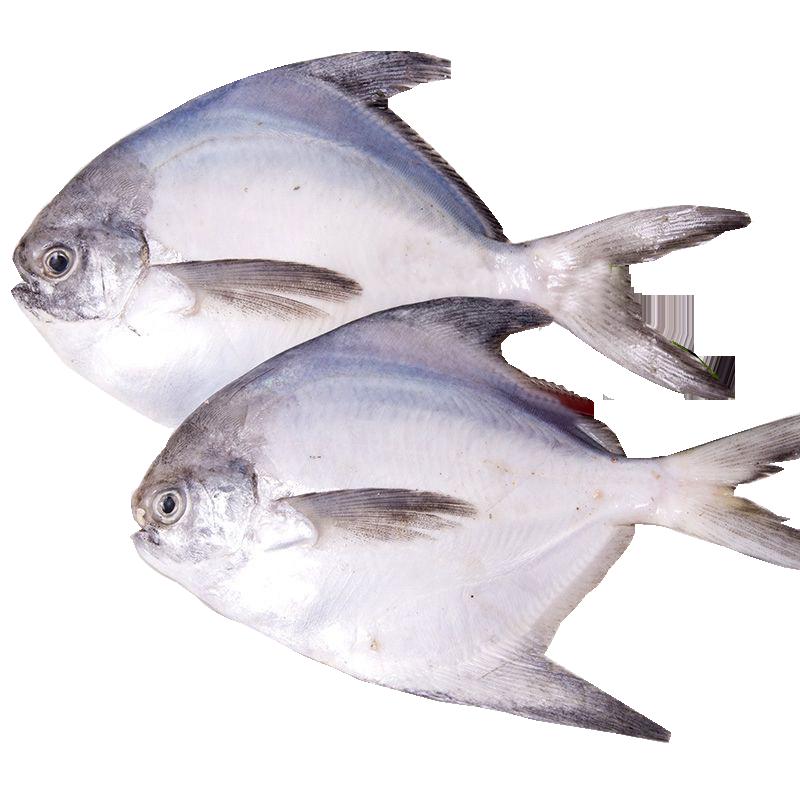 东海大白鲳鱼430-480g/条新鲜冷冻舟山海鲜特产全国航空