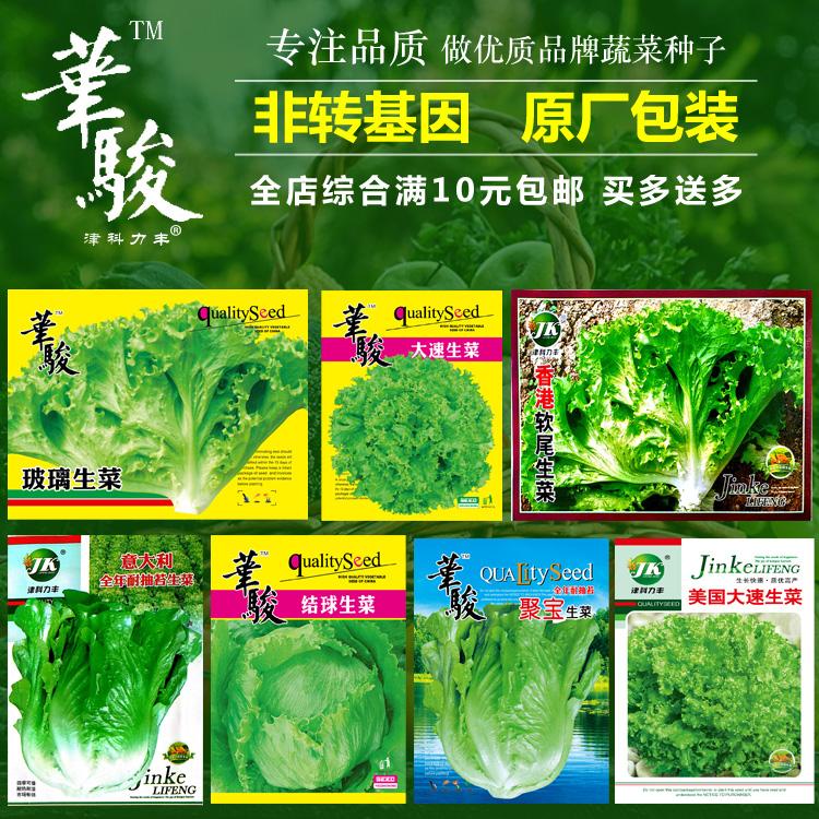 四季播种蔬菜种子生菜种子阳台种菜奶油生菜籽菜园播种球生菜种子