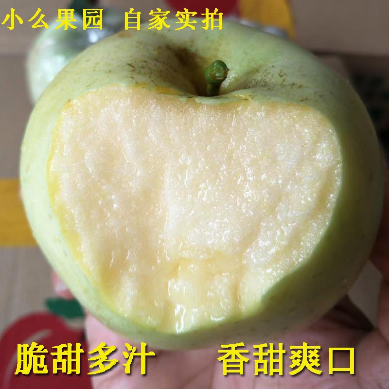 2018山东特产新鲜孕妇水果青苹果美味现摘现发五斤包邮脆甜多汁