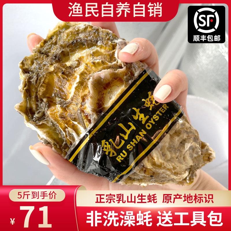 山东乳山新鲜生蚝鲜活海鲜水产海蛎子贝壳牡蛎带壳5-10斤特大包邮