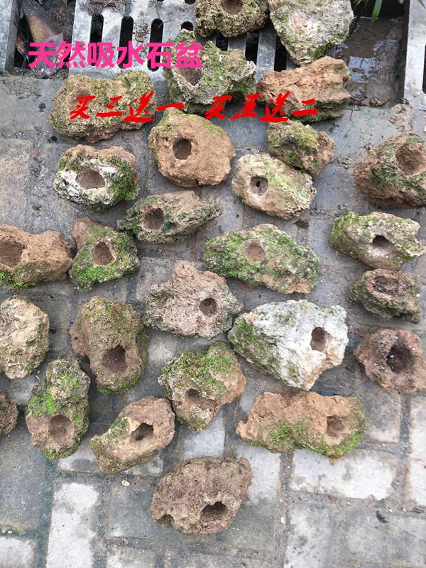Абсорбент камень оригинал камень ложный гора камень sheung-шуй камень карликовое дерево зеленый из природный увлажнение устройство специальное предложение аир тростниковый по бассейн больше мясо бассейн