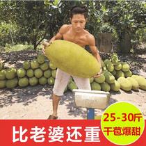 25-30斤海南三亚菠萝蜜当季现摘新鲜水果包邮热带特产大树波罗蜜