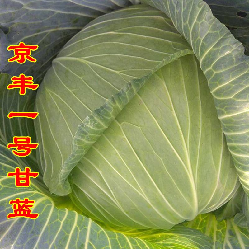 甘蓝种子 京丰一号卷心菜种籽圆包菜籽 春秋季播早熟高产蔬菜种孑