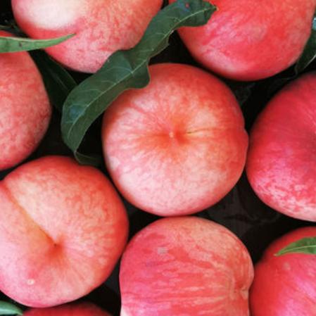 金秋红蜜桃新鲜水果脆桃整箱4.5斤左右顺丰包邮