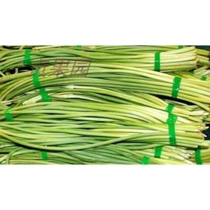 农家新鲜精品蒜薹蒜苔带箱新鲜蒜苗