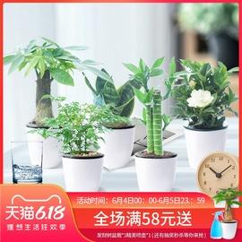 绿植花卉绿萝富贵竹栀子花发财树文竹芦荟室内水培植物盆栽好养图片