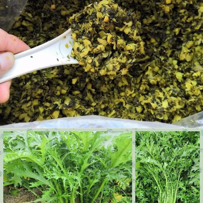 雪菜咸菜腌菜酸菜下饭菜开胃菜雪里红酸菜湖北特产酸菜包子馅袋装