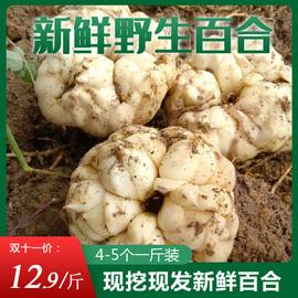 龙山新鲜百合500g1斤装纯农家百合食用天然非兰州产百合干货图片