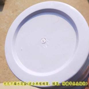 花盆百草集推出碗蓮睡蓮花盆無孔塑料花盆不漏水花盆高花盆