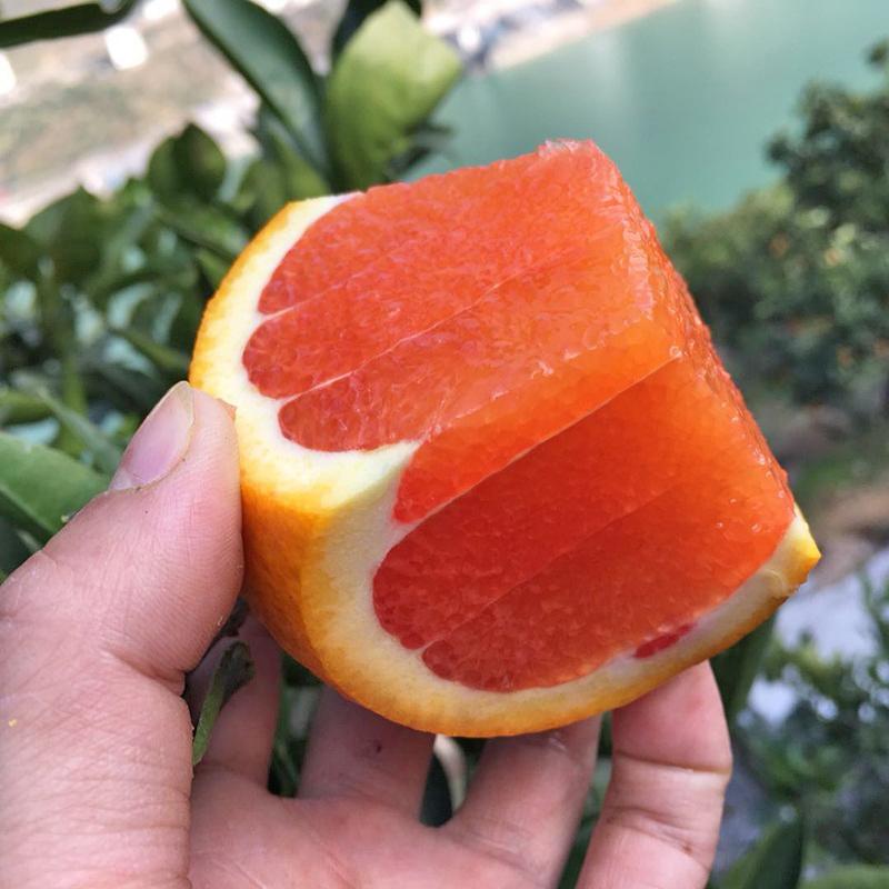 血橙新鲜水果中华红秭归脐橙红肉橙子当季雪橙甜橙手剥橙5斤包邮