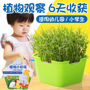幼儿园植物儿童观察生长种植小学生盆栽发芽水培日记迷你创意可爱