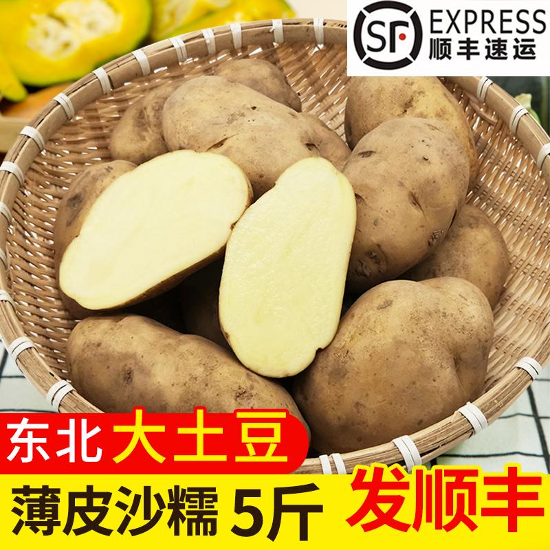 东北土豆5斤新鲜蔬菜应季青菜黄心土豆农家自种马铃薯洋芋大土豆