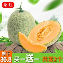 【朵虹】哈密瓜网纹蜜瓜2个装5-6斤