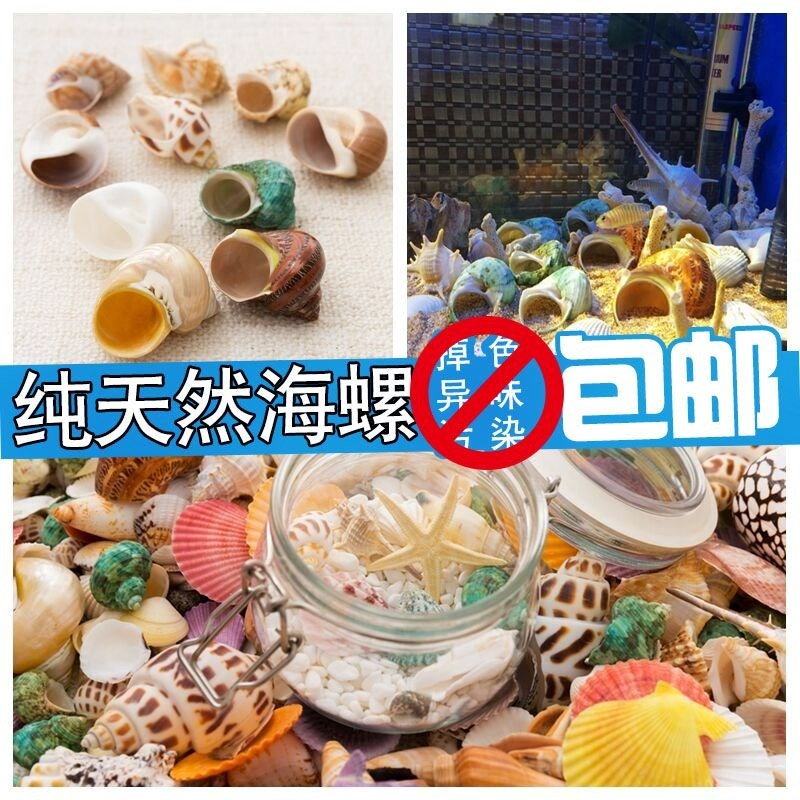 Natural conch, coral and starfish combination suit, fish tank, decoration, wedding celebration, shell fish, hermit crab.