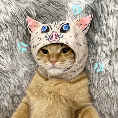 鬼灭之刃嘴平伊之助宠物用品小猫咪毛绒头套帽子装扮头饰拍照道具