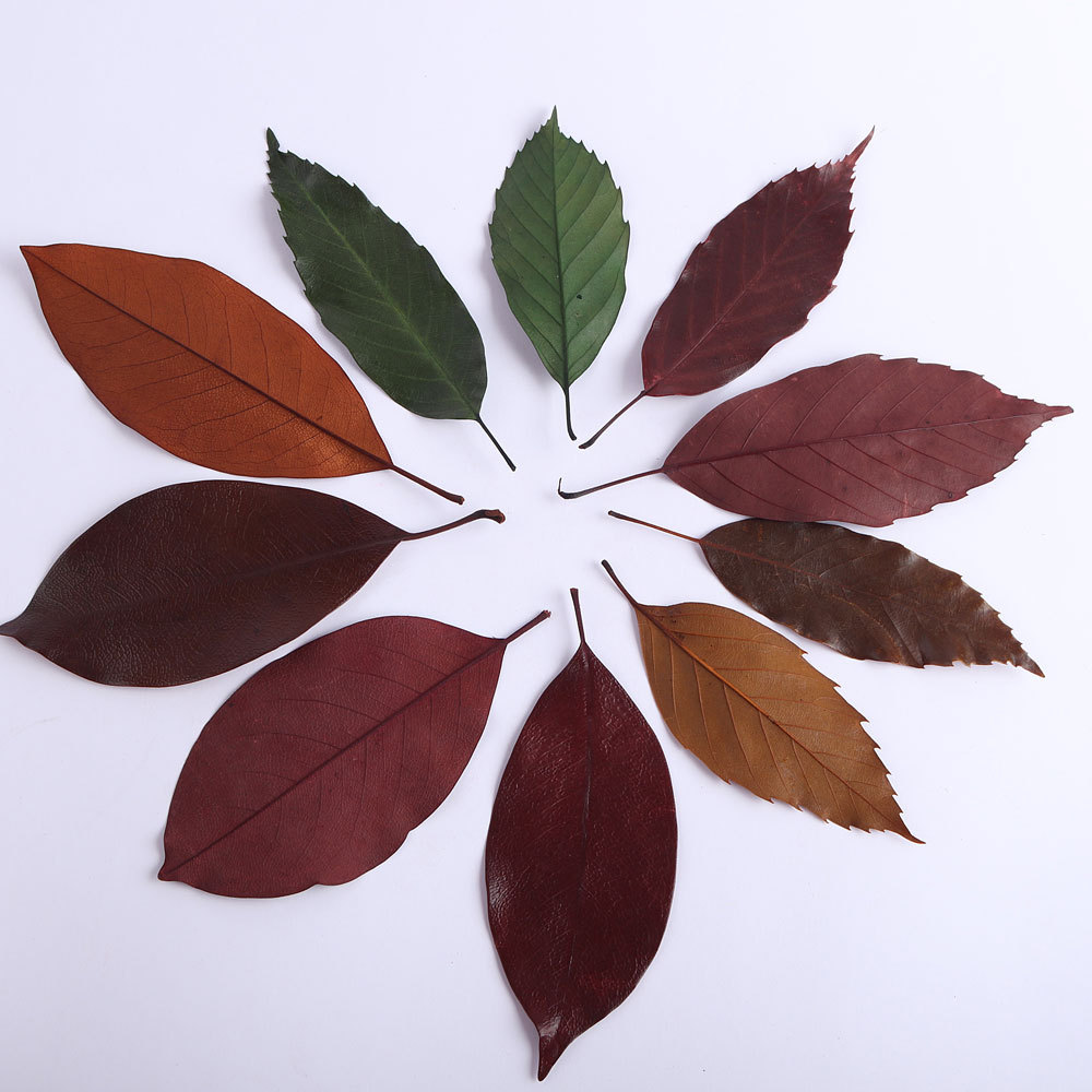 Natural dry flowers, leaves, retro fallen leaves, Photo Props, DIY photo frame accessories, wreath leaves, immortal flower materials