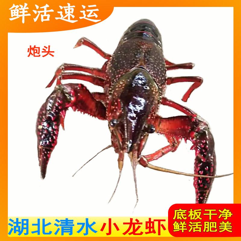 43.00元包邮清水养殖小龙虾水产鲜活规格批海鲜