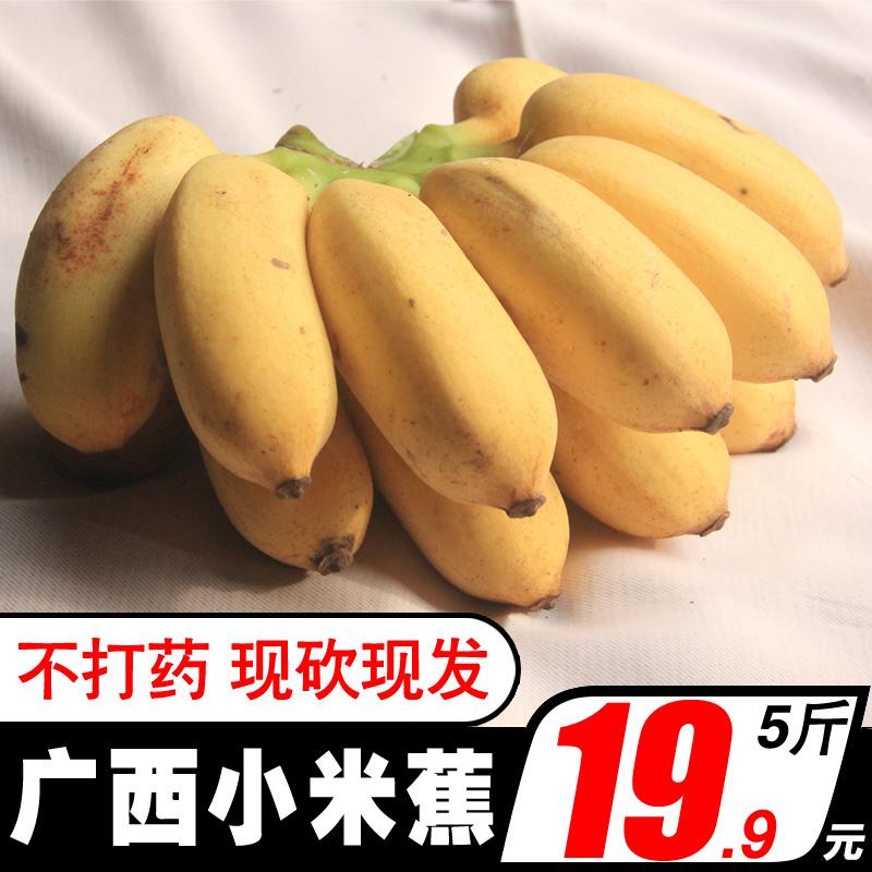 香蕉 广西小米蕉香蕉新鲜banana水果批发价不是芭蕉皇帝蕉5包邮