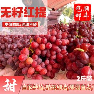 水果 无籽红提2斤顺丰 新鲜水果红提子无核葡萄甜水果应季 包邮