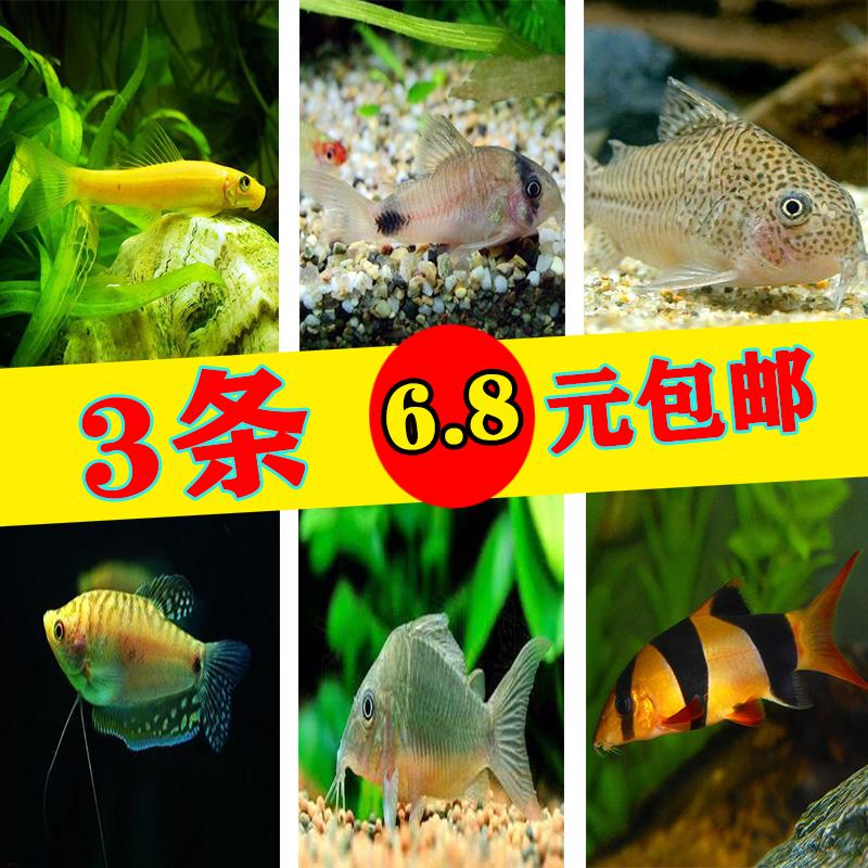 Рыбы Артикул 606364291233
