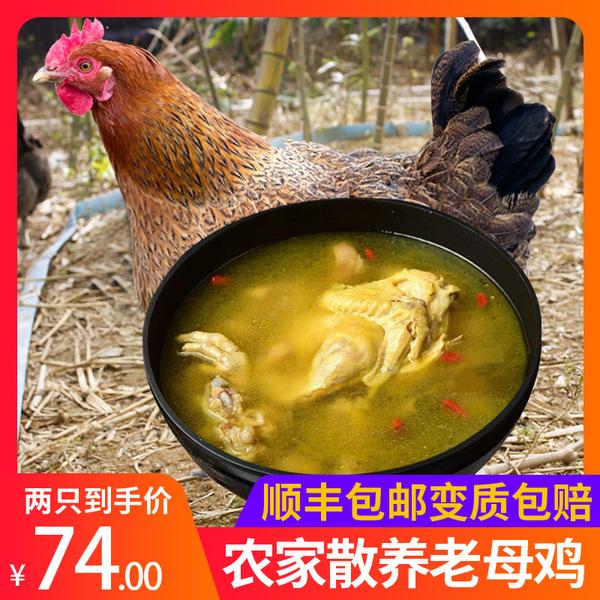 牧憨农庄 散养老母鸡 1kg
