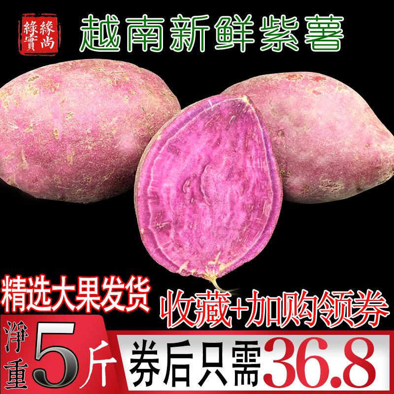 越南紫薯净重5斤 新鲜沙地小红薯现挖大番薯地瓜发10-12个大香薯