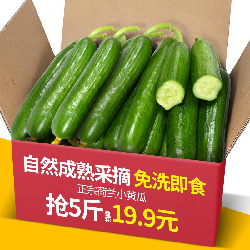 农家现摘水果小黄瓜5斤装新鲜生吃荷兰无刺青瓜黄瓜海阳白玉东北