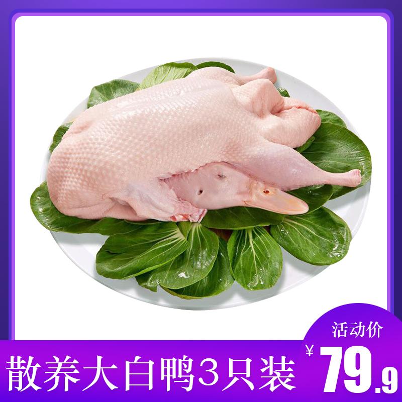 3只农家散养土鸭子新鲜嫩鸭冷冻鸭肉批发大白鸭生鸭白条鸭2斤整只