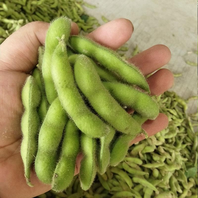 毛豆农家新鲜农蔬菜生毛豆青豆现摘带壳豆角净重5斤包邮
