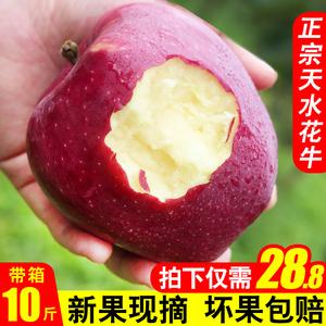 甘肃天水花牛苹果水果带箱10斤新鲜红蛇果粉面宝宝刮泥平果包邮