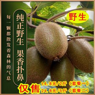 武陵山野生现季新鲜孕妇儿童猕猴桃
