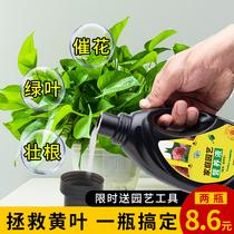 绿萝营养液植物通用型养花肥料发财树富贵竹水培花卉盆栽家用花肥