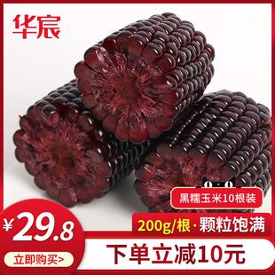 华宸黑玉米新鲜现摘甜糯玉米棒黏粘紫玉米棒开袋即食真空袋装包邮
