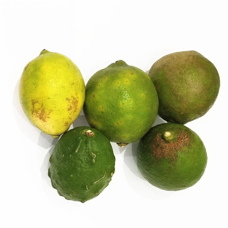 四川安岳尤力克新鲜9斤包邮青柠檬