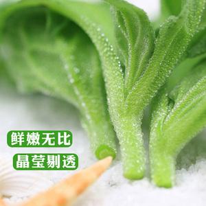 冰草新鲜蔬菜生吃生菜1斤蔬菜沙拉