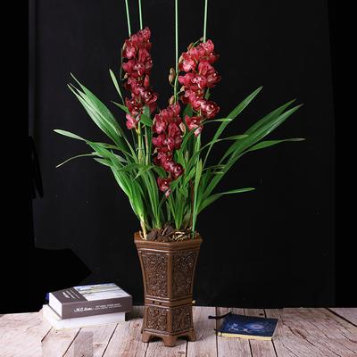 四季兰花苗花卉盆栽绿植物室内建兰墨兰大花蕙兰香妃浓香型带花苞