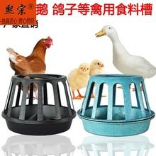 バードフィーダーでハトを供給トラフ用品家電鳩のオウムの食品容器を散水水のボトルを飲みます。