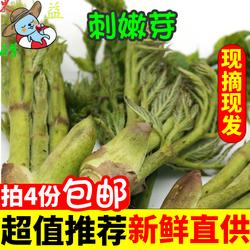 刺嫩芽山野菜刺老芽新鲜包邮东北新鲜蔬菜1份250克装4份顺丰包邮
