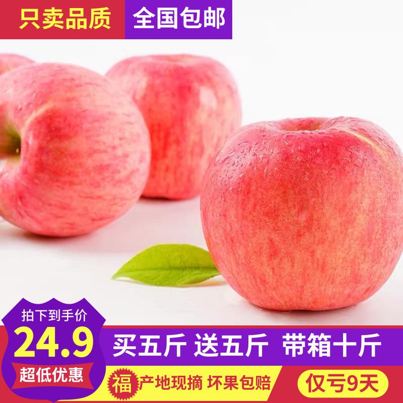 陕西新鲜红富士脆甜苹果现摘现发孕妇吃带箱10斤包邮