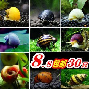 观赏螺除藻螺活体蜗牛宠物淡水苹果螺黑金刚洋葱斑马黄金螺神秘螺