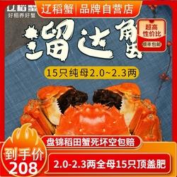 盘锦稻田蟹河螃蟹鲜活15只全大闸蟹