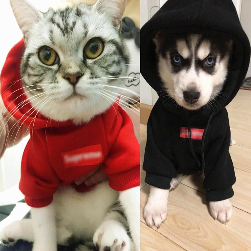 狗狗衣服网红抖音同款秋冬博美泰迪比熊柯基猫咪小狗宠物潮款卫衣