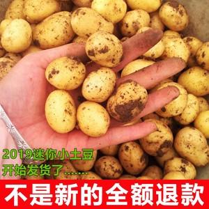 5斤新鲜黄心土豆自种新鲜迷你小土豆新鲜蔬菜马铃薯中国