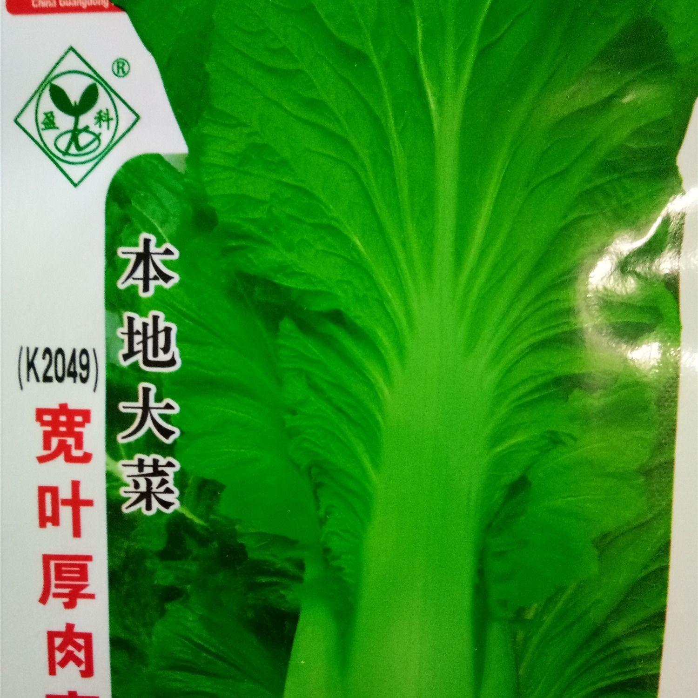 {买二送一}宽叶厚肉高脚芥菜种子本地大菜高产生长快大田青菜籽