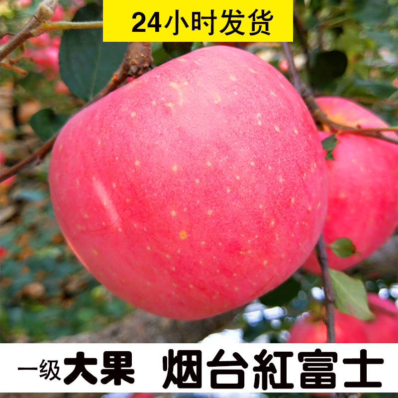 Authentic Yantai apple 10 fruit Shandong specialty Qixia Red Fuji 5 fresh crisp sweet whole box wholesale Ping Guo Jin
