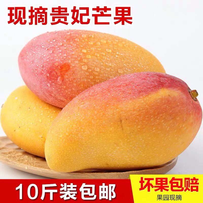 海南贵妃芒10斤装芒果新鲜中果红金龙三亚热带水果树上熟贵妃包邮